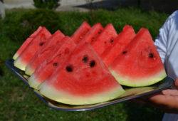 lubenice1